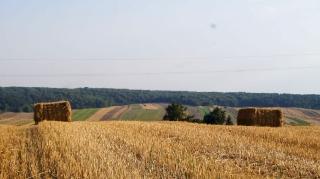 Fot. D. Kordyś-31