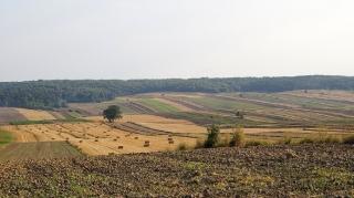 Fot. D. Kordyś-36